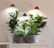 SUNLiTE LED-Pflanzenlampe