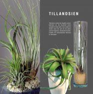 Tillandsien und Grünpflanzen