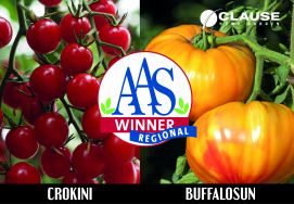 "Two HM.CLAUSE tomato varieties awarded the All America Selections (AAS)* ""Regional"" prize for BUFFALOSUN and CROKINI"