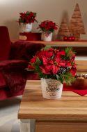 Dallas Christmas planters