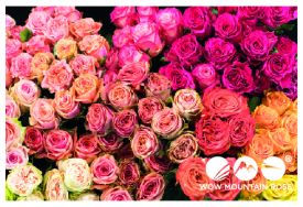 """""""WOW Mountain Rose: a wonder of the Nature by Barile Flowers Service"""